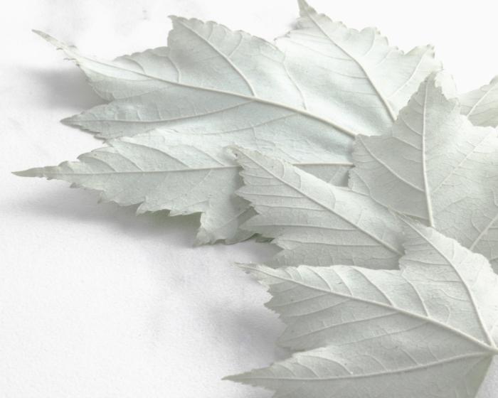 Backwards Leaves 8x10.JPG