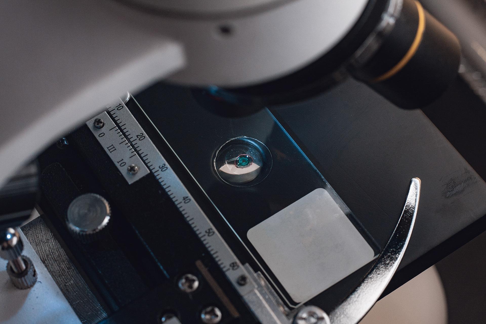 Mendel project microscopic photography francois hurtaud.jpg