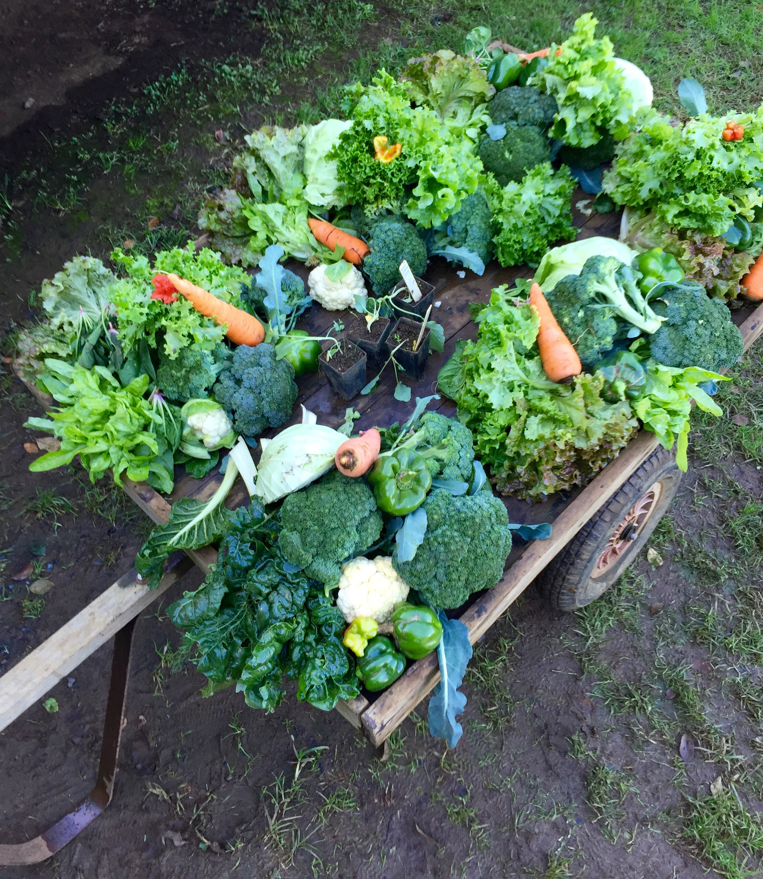 Community Garden Winter Abundance