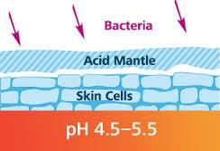 bacteria-acid-skin-cell-ossetra-ph.jpg