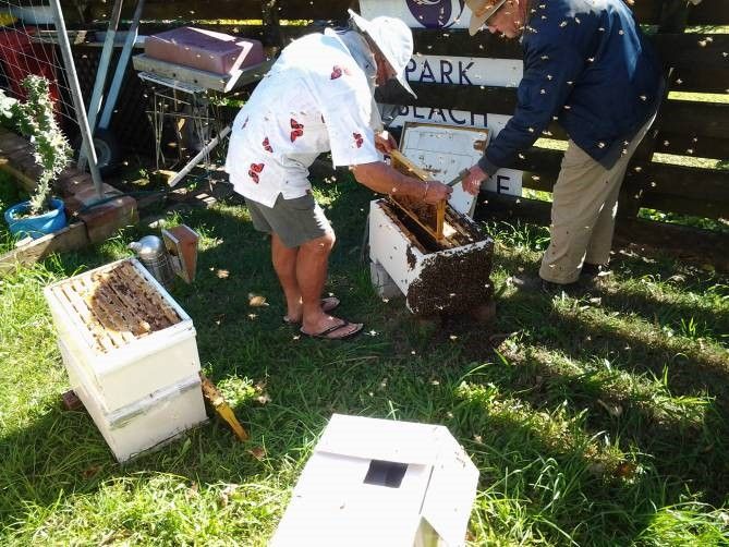 MNC many bees.jpg