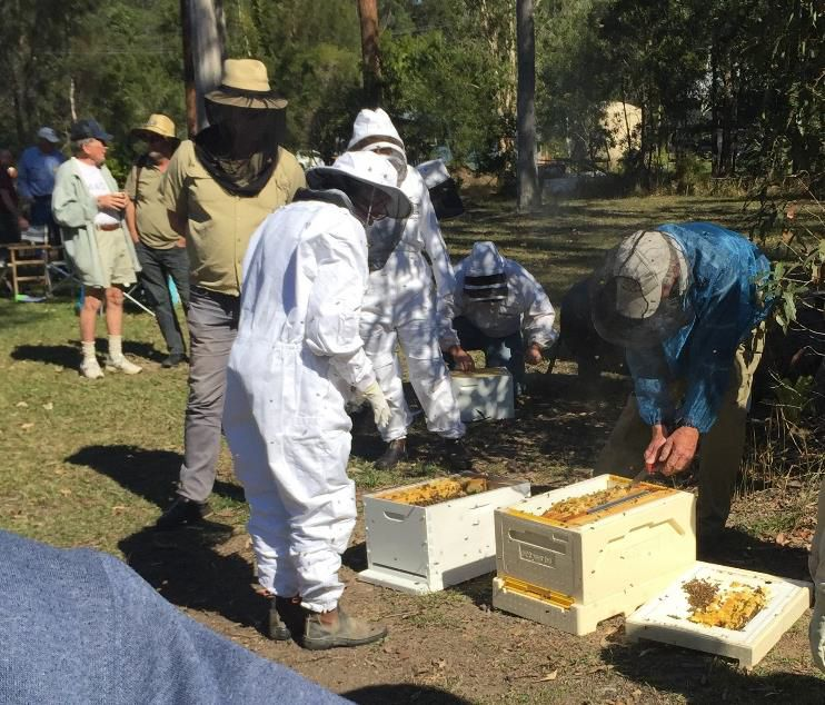 A Colony Transfer into Maree's Flow Hive
