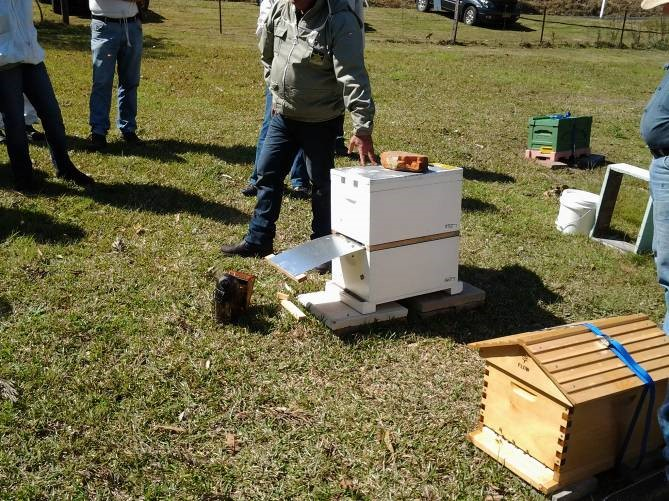 Glen's apiary. Yes that's a flow hive in the foreground