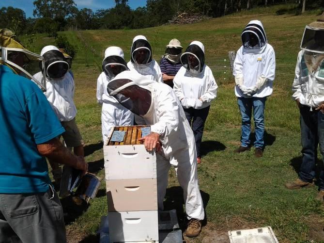 Al opening a hive