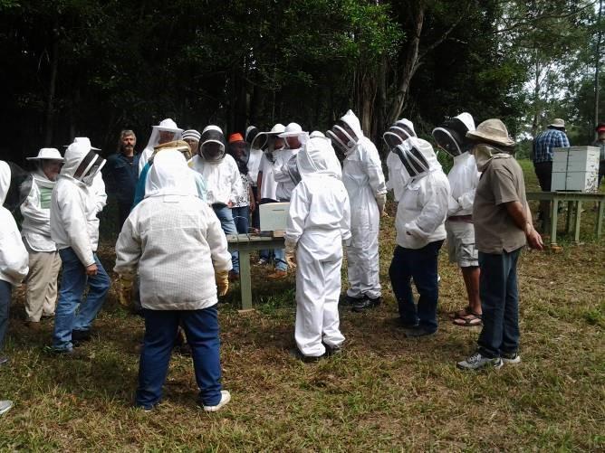Circling the hive