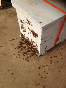 Hive placed April 2016 in Galston NSW