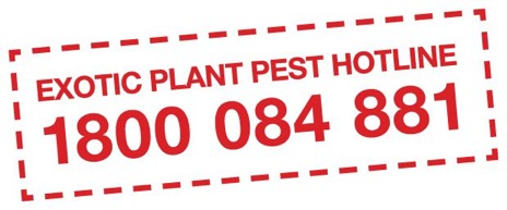 Call the Exotic Plant Pest Hotline immediately if you detect – or think your hives may have – mites.