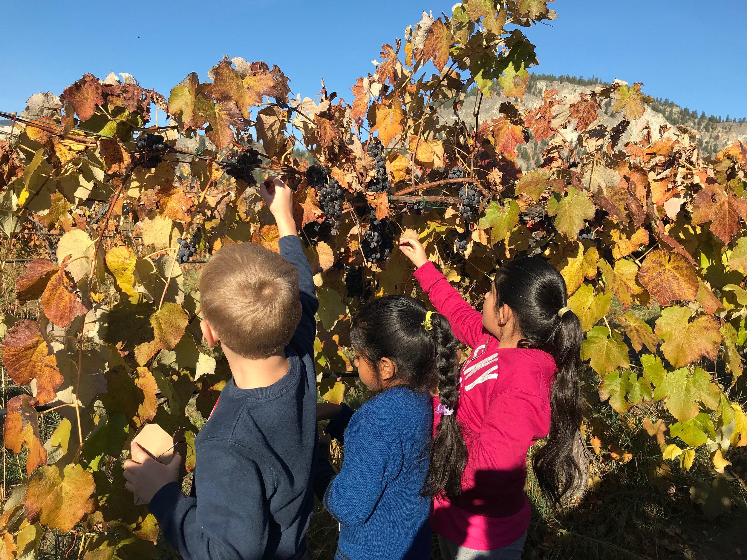 3 children picking grapes.jpg