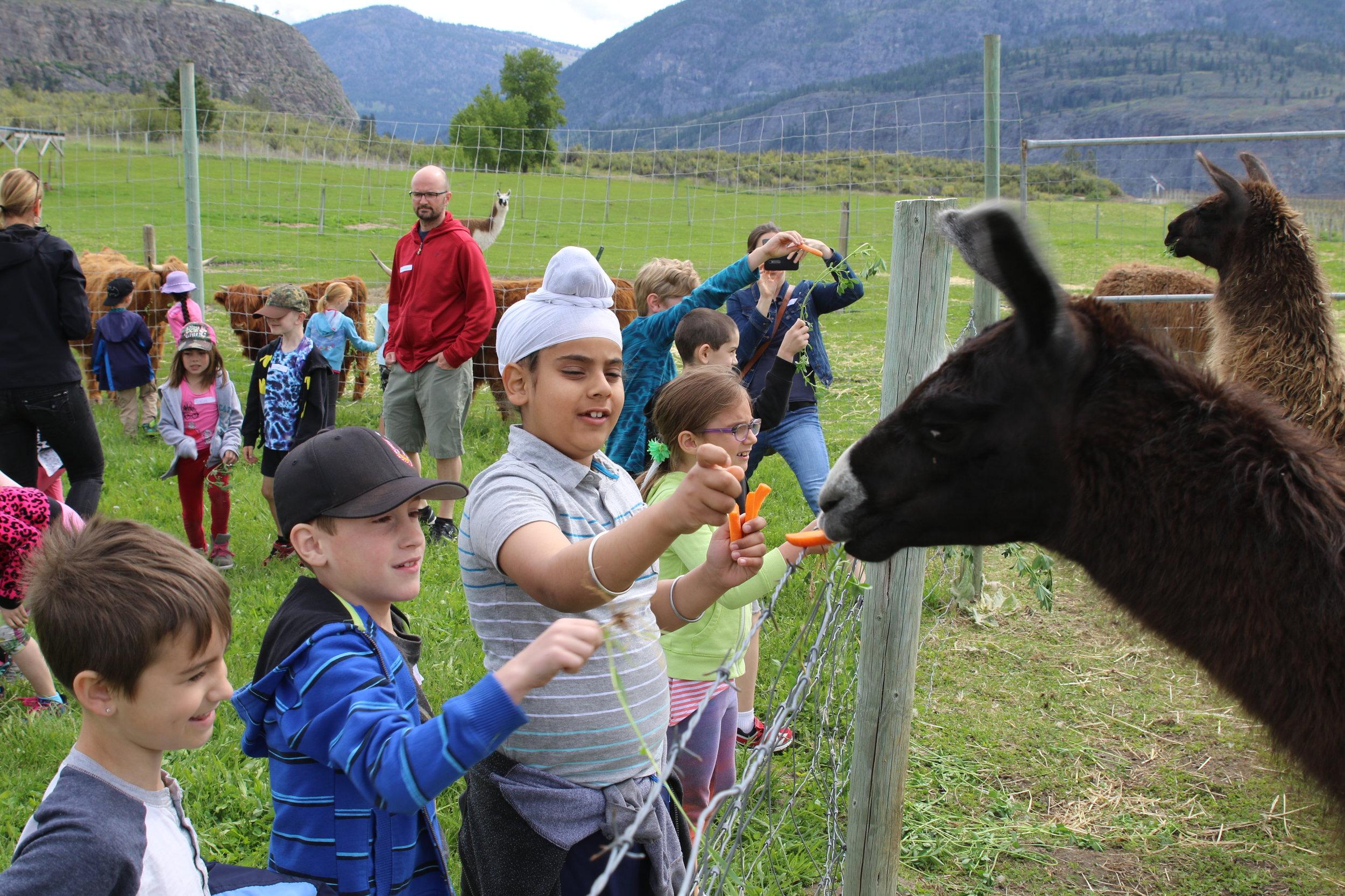 kids feeding llama.JPG