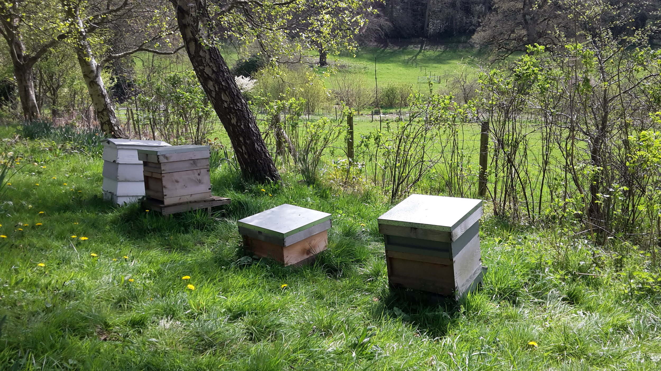 bee hives close up.jpg
