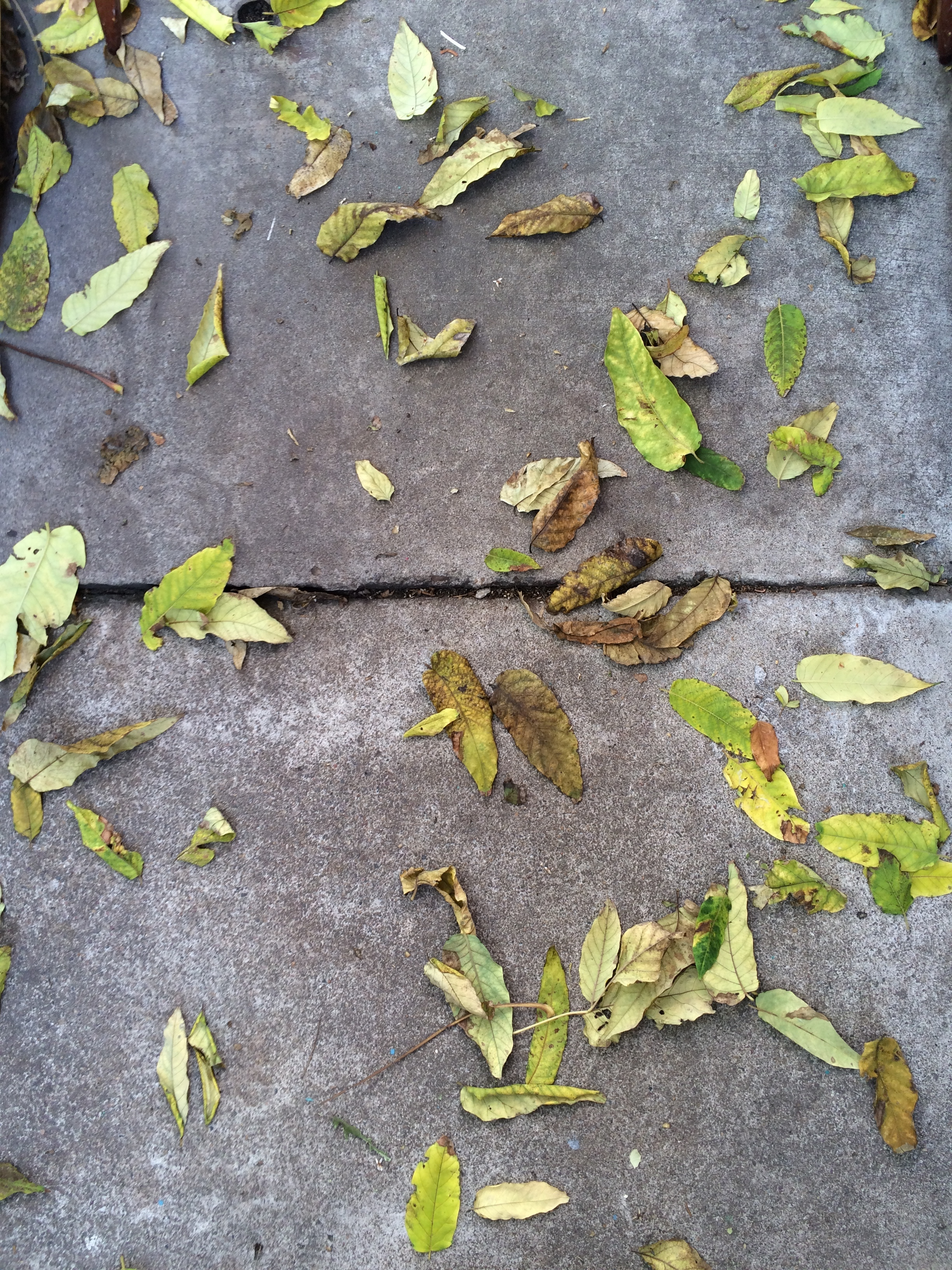 11.16.14_greenfallleaves.JPG