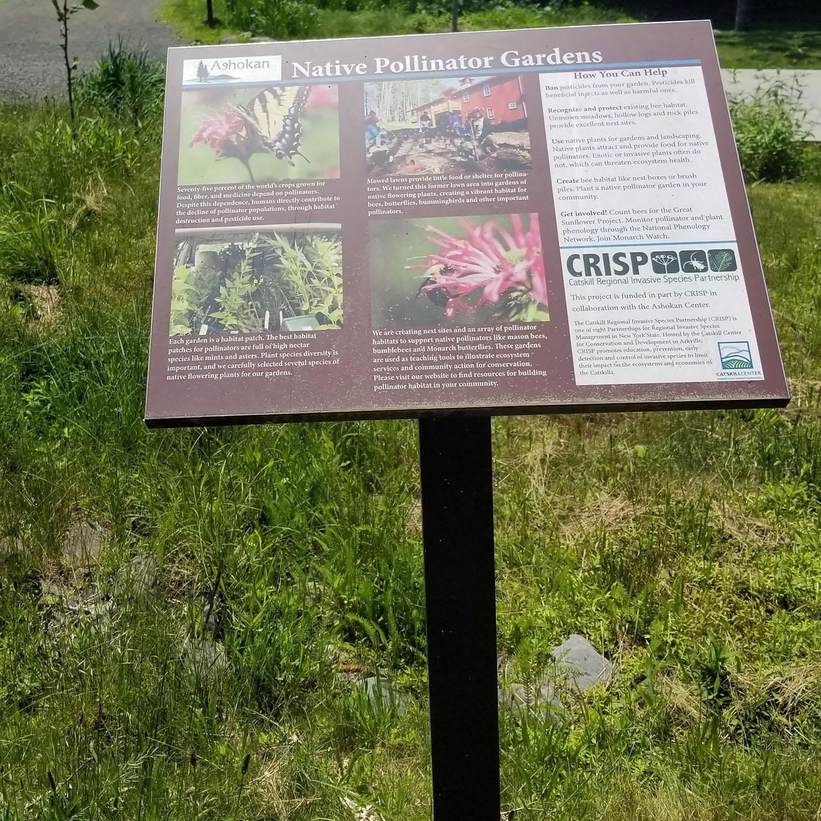 native-pollinator-garden.jpg