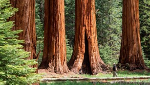Photo: Sequoia & Kings Canyon National Parks California