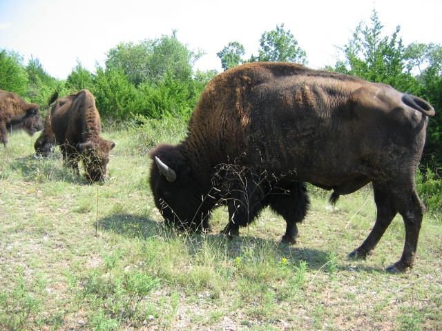 Photo: National Park Service, CHICKASAW NATIONAL RECREATION AREA