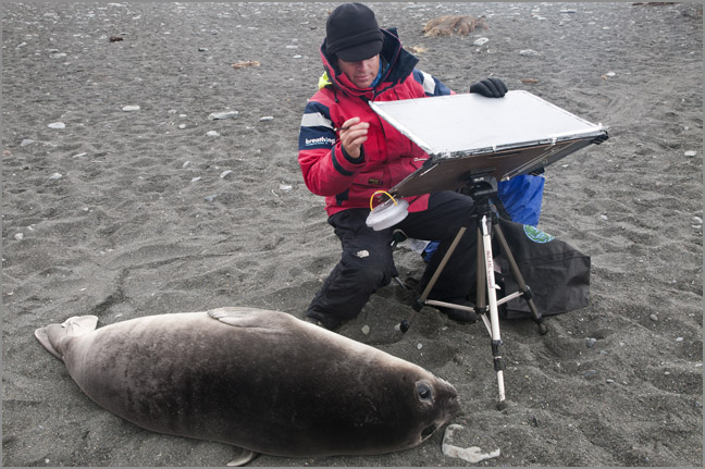 Painting with Elephant seal pup at Gold Harbour