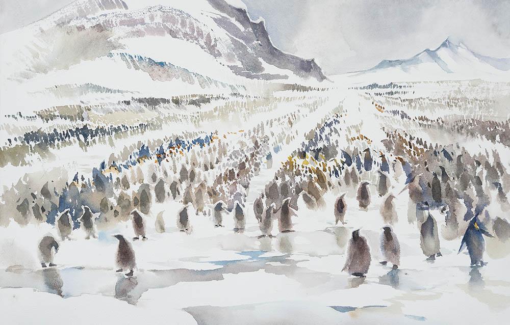 Salisbury Plain King Penguin Rookery