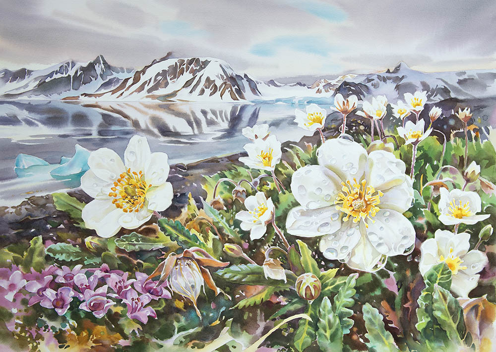 High Arctic Summer (available for sale)