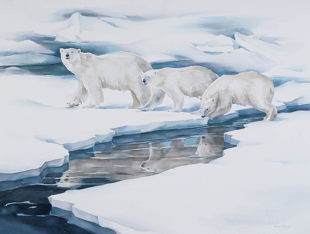 Polar Bear Reflections