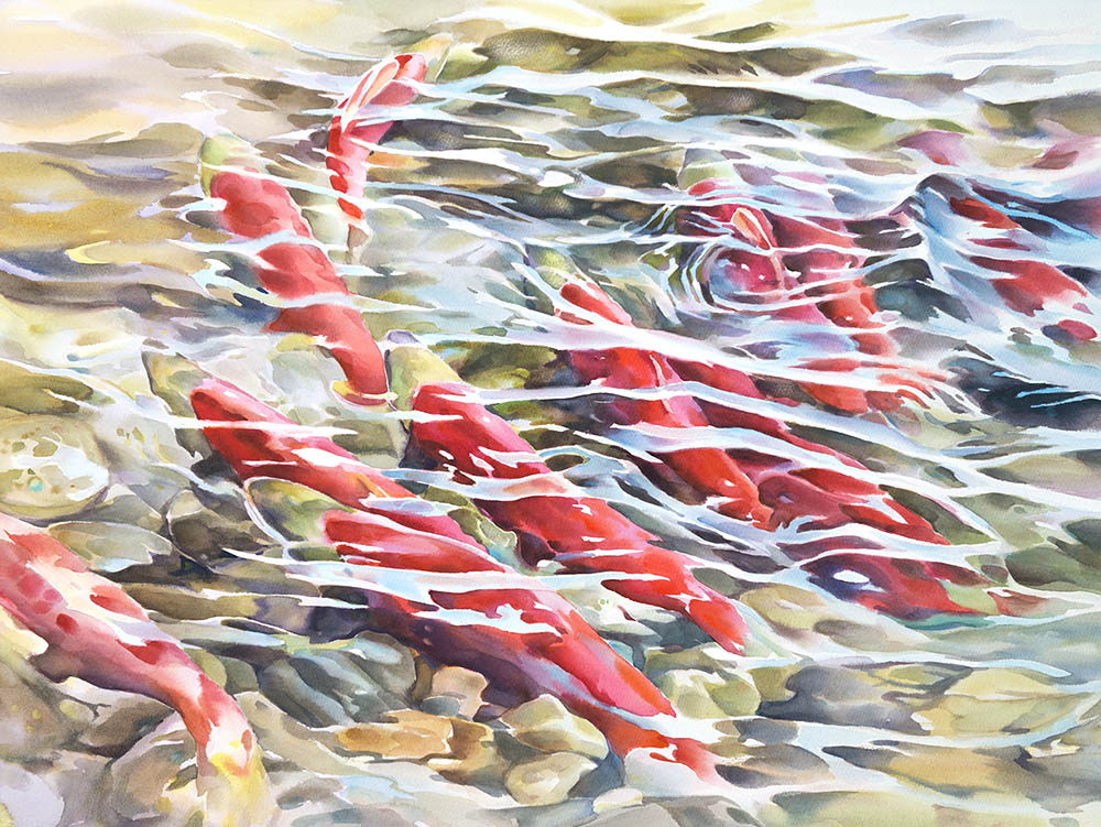 Return of The Sockeye n.2