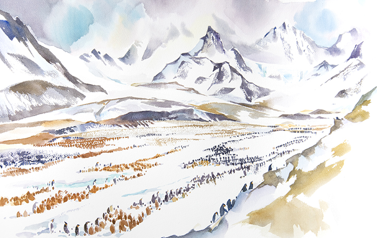St. Andrews Bay, King Penguin Colony, 15 x22 inches watercolour