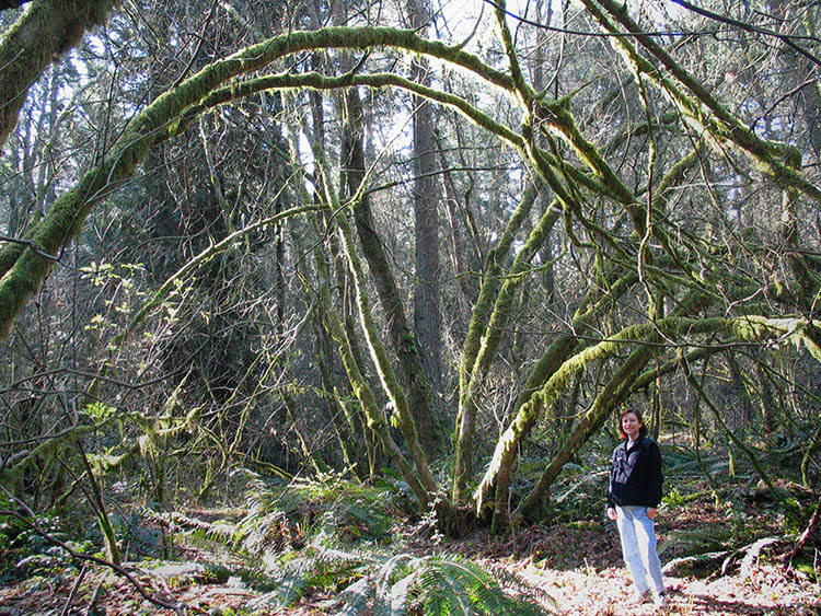 """""""Priscilla in the Pacific Spirit Park, a constant source of inspiration for her work in fabric."""""""