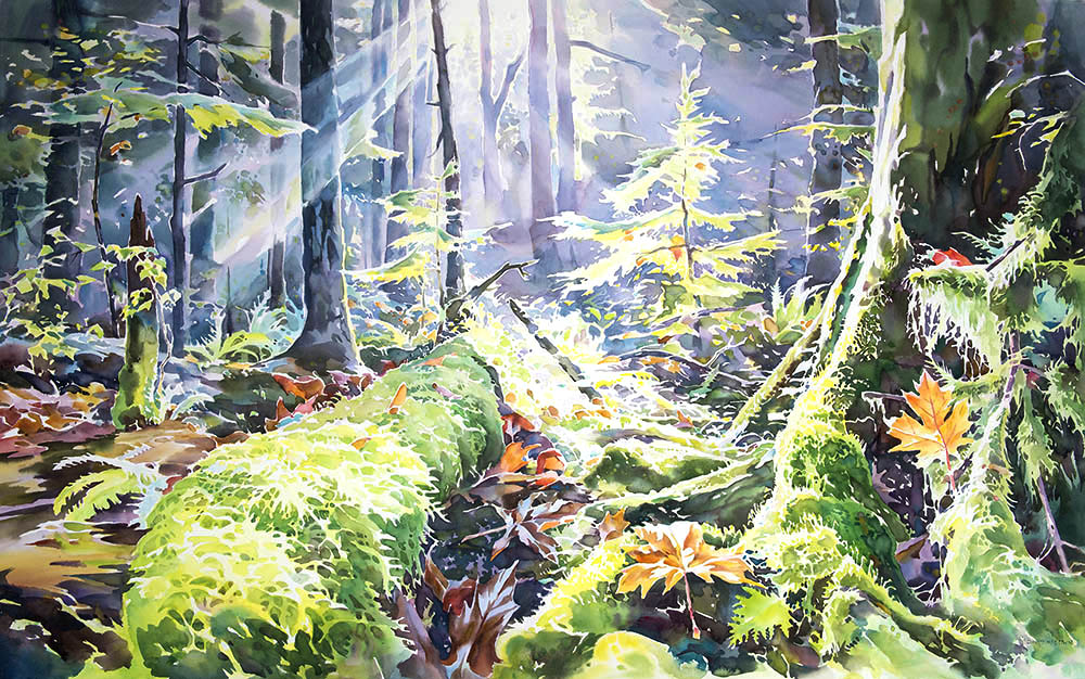 Autumn in the Pacific Spirit Forest