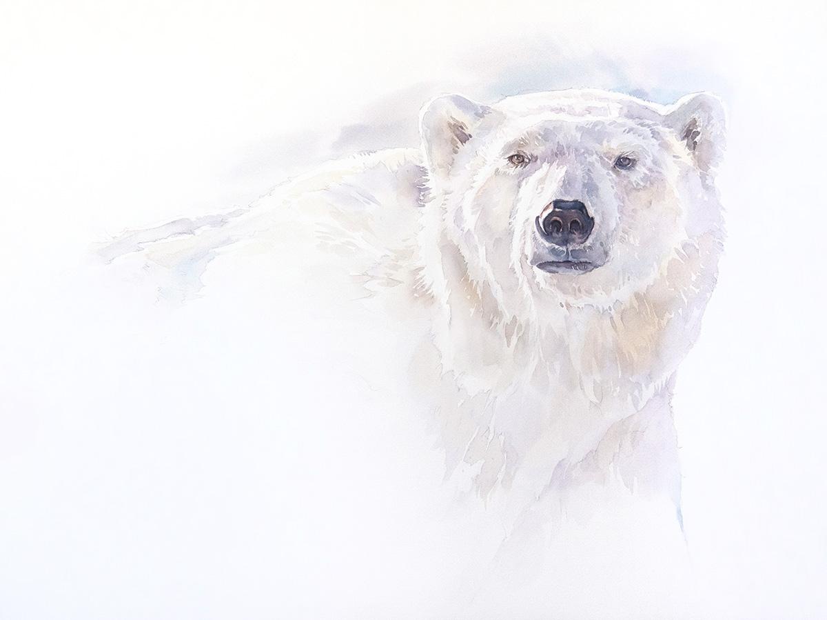 polarbear_01.jpg