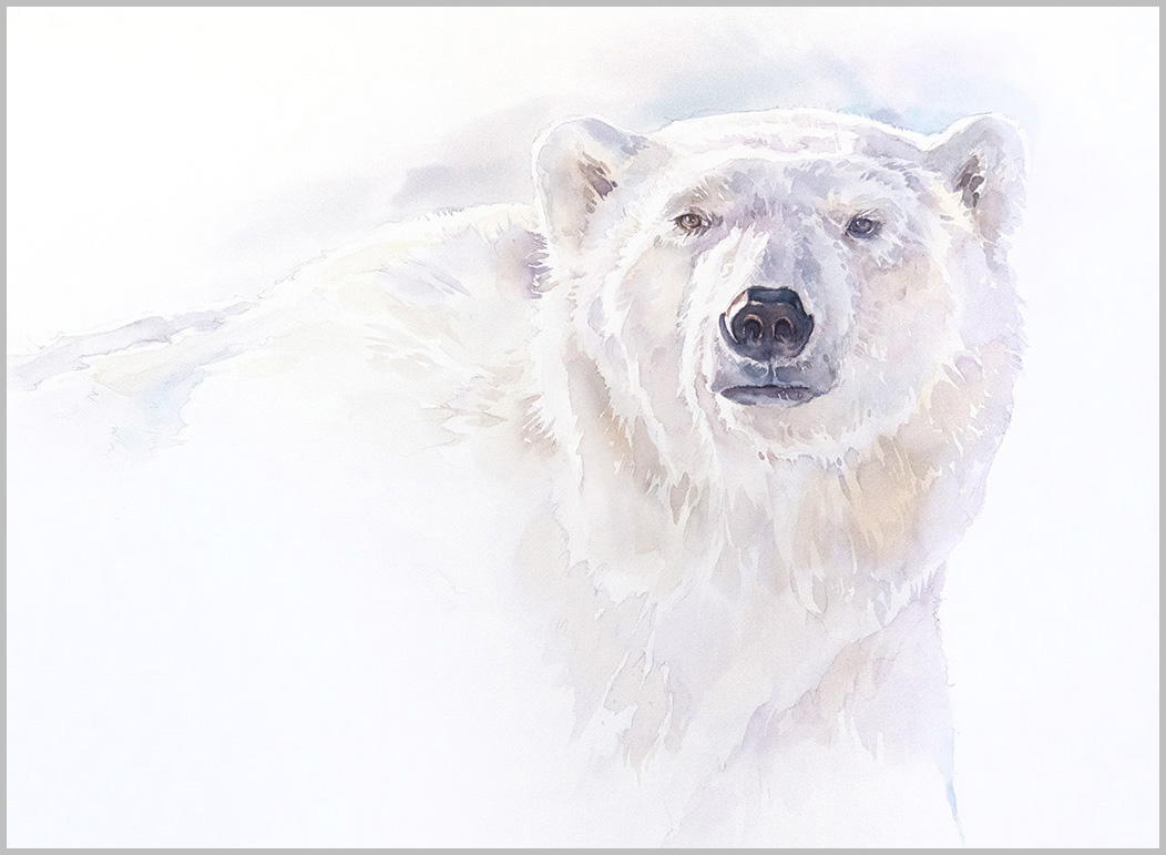 Polar Bear #7, 22 x30 inches watercolour  (available for sale)