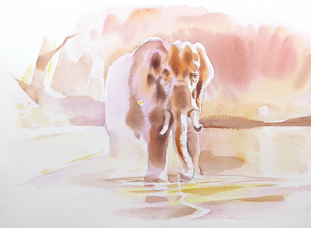 Chobe River Sunset Study