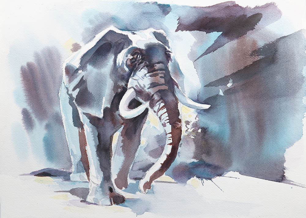 Moonlight Elephant Study