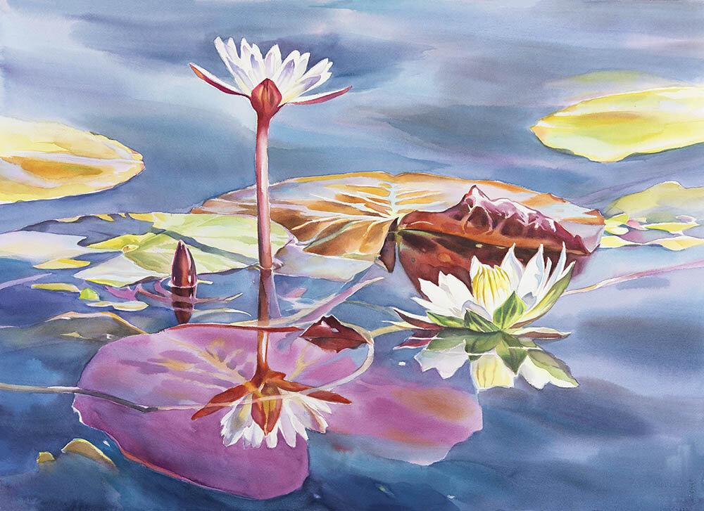 Waterlilly - Chobe n.1 (available for sale)