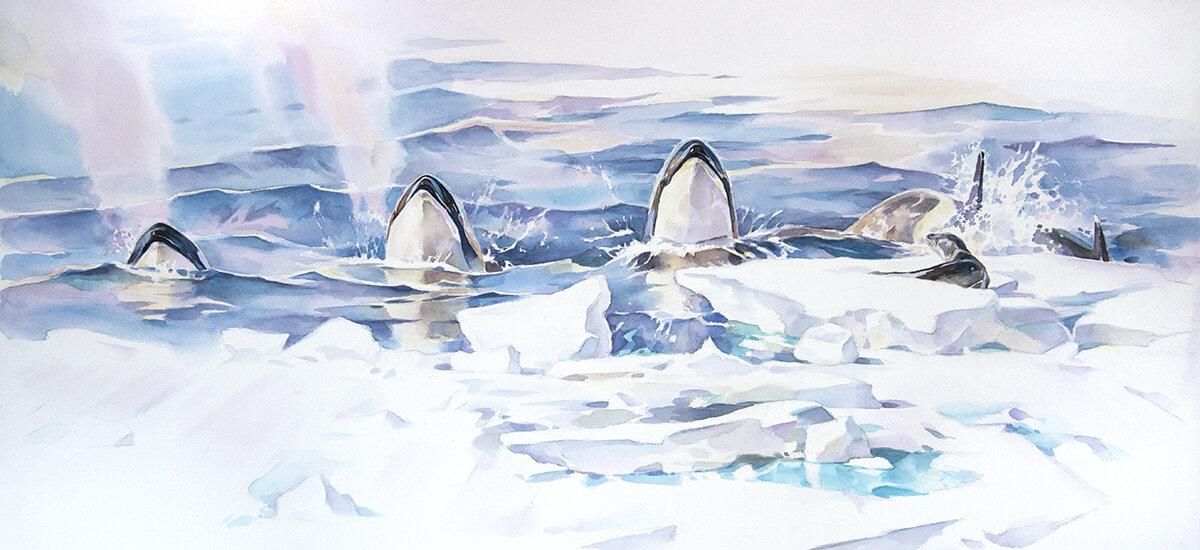 In Unison, orca hunt