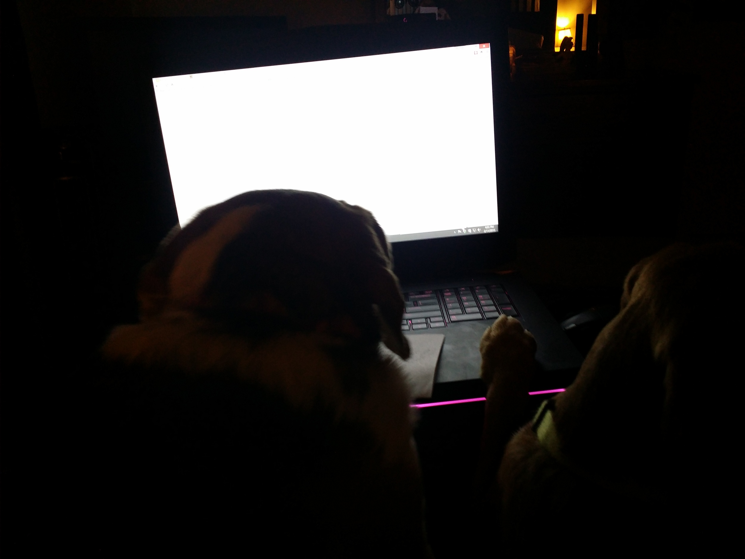 Beagles decided to game on my Laptop. *sigh*