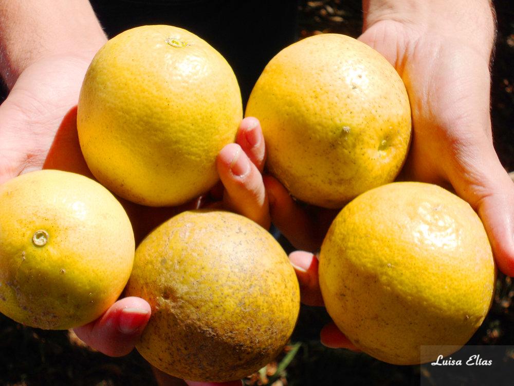 Oranges - 2011