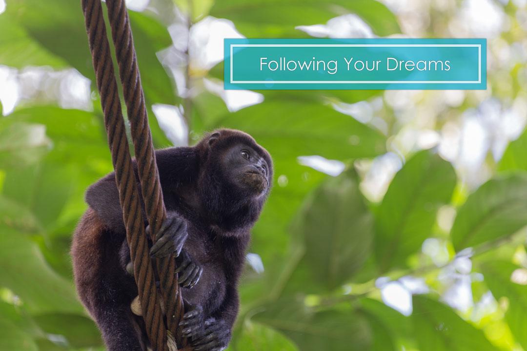 home_slides_2_monkey.jpg