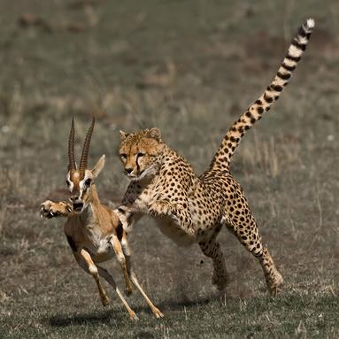 If he catches me I'll have to learn evolution. NOOOOOOOOOOO!!!