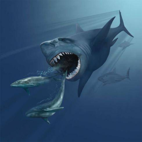 It's a pod of megaladon! Swim for you life!!! (Or just give up)