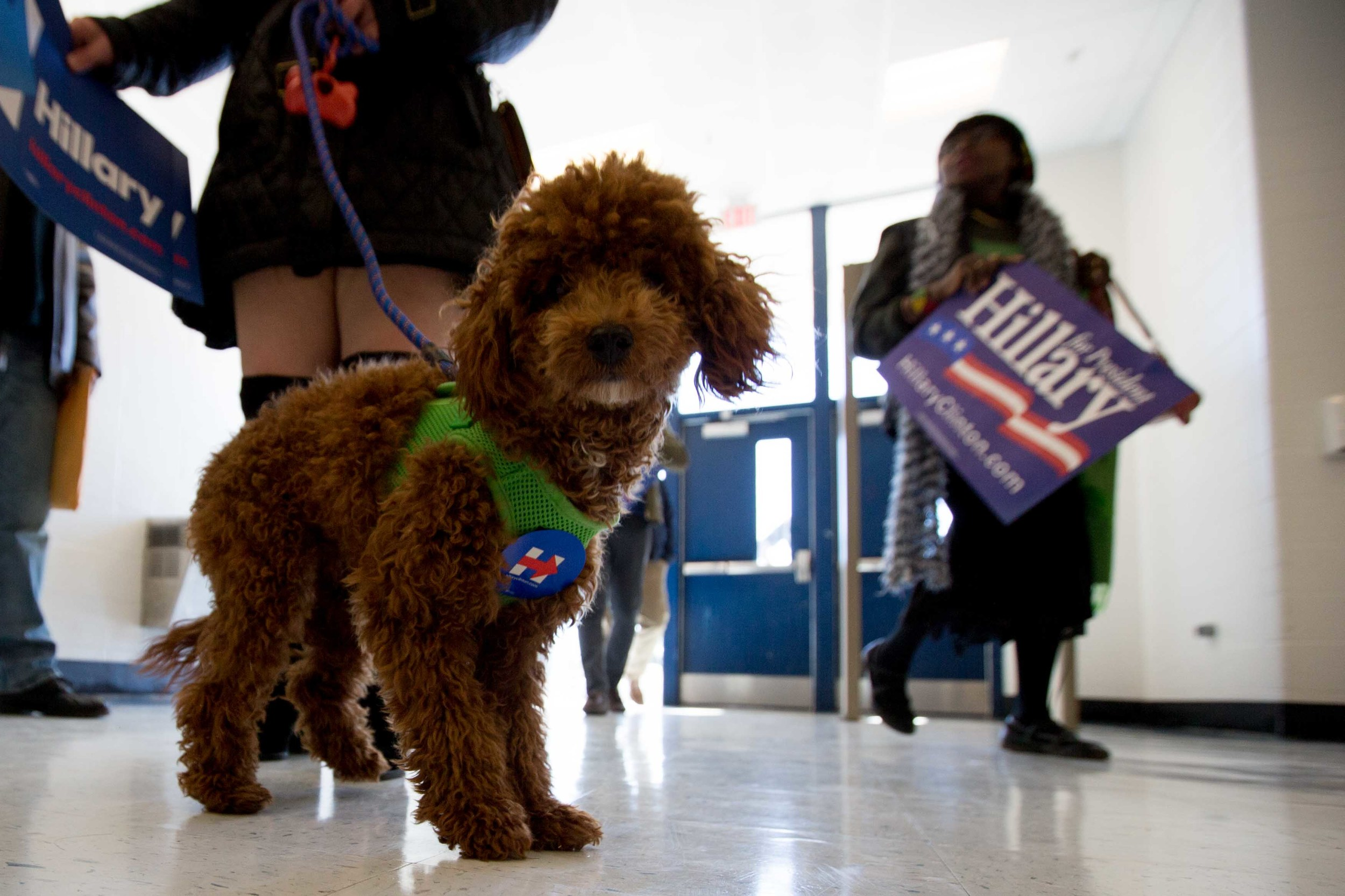 A woman brings her dog, who's wearing a campaign sticker,  to see former President Bill Clinton speak during a campaign stop for his wife, Democratic presidential candidate Hillary Clinton, at North Clayton High School. (Credit Image: © Branden Camp via ZUMA Wire