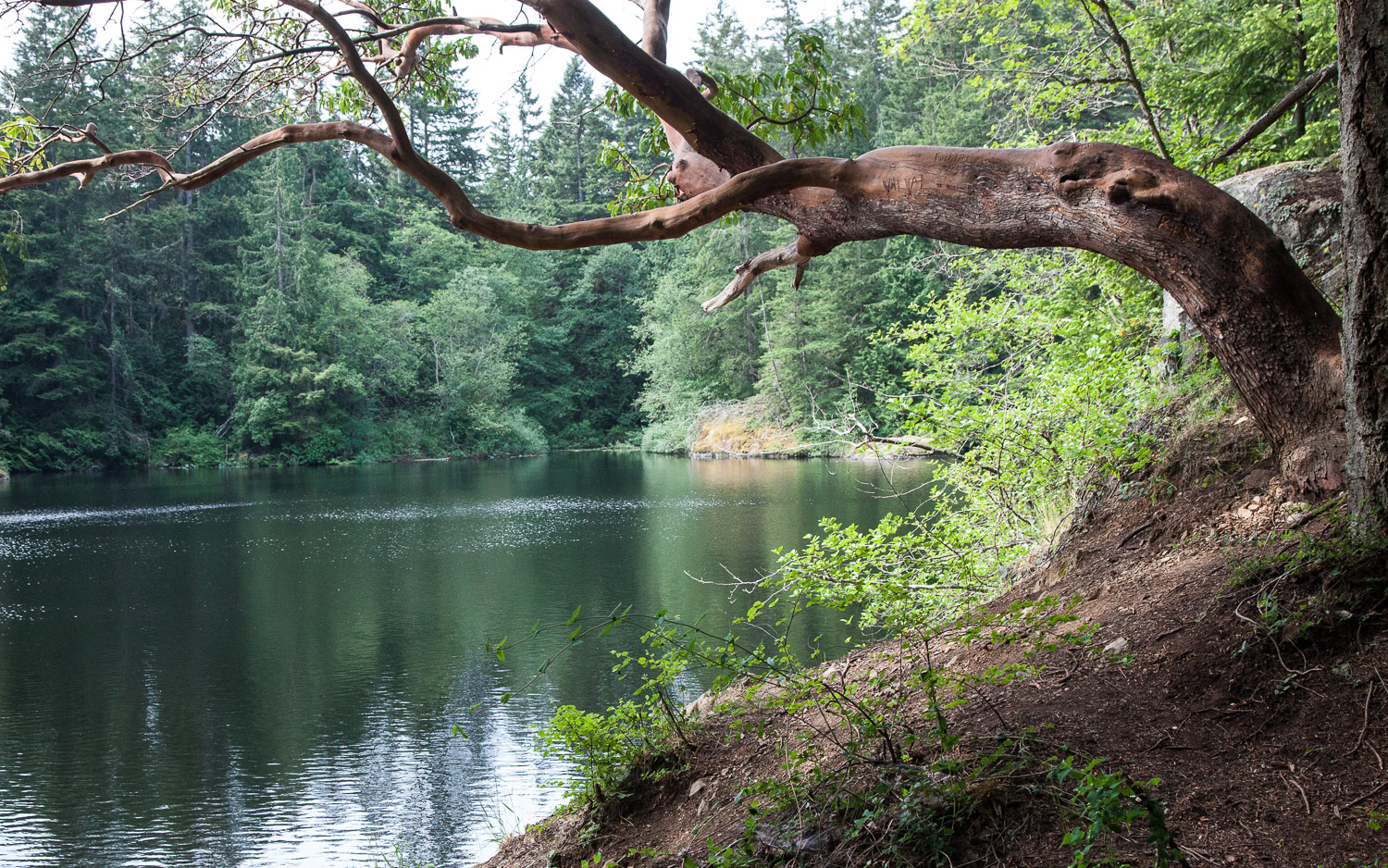 View from north side of Whistle Lake, the most popular swimming lake on Fidalgo Island.