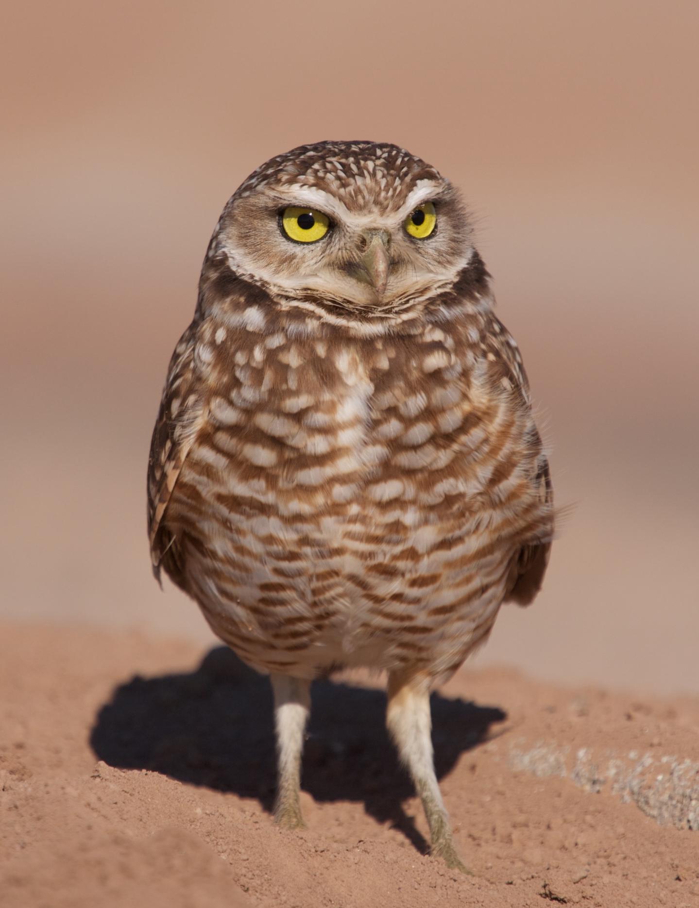 Standing guard, Salton Sea, CA