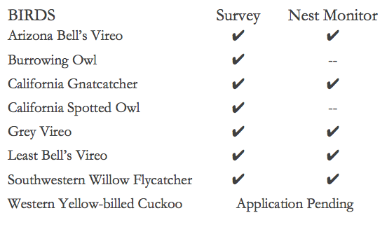 Birds Species List.png