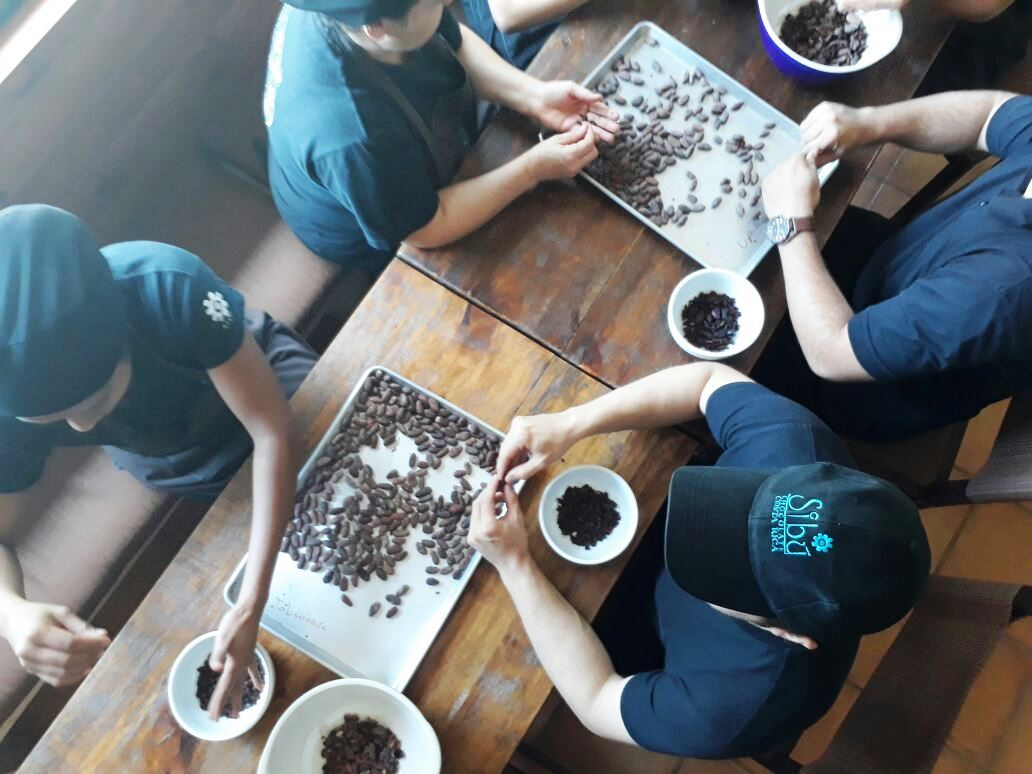 Seleccionando cacao.jpg