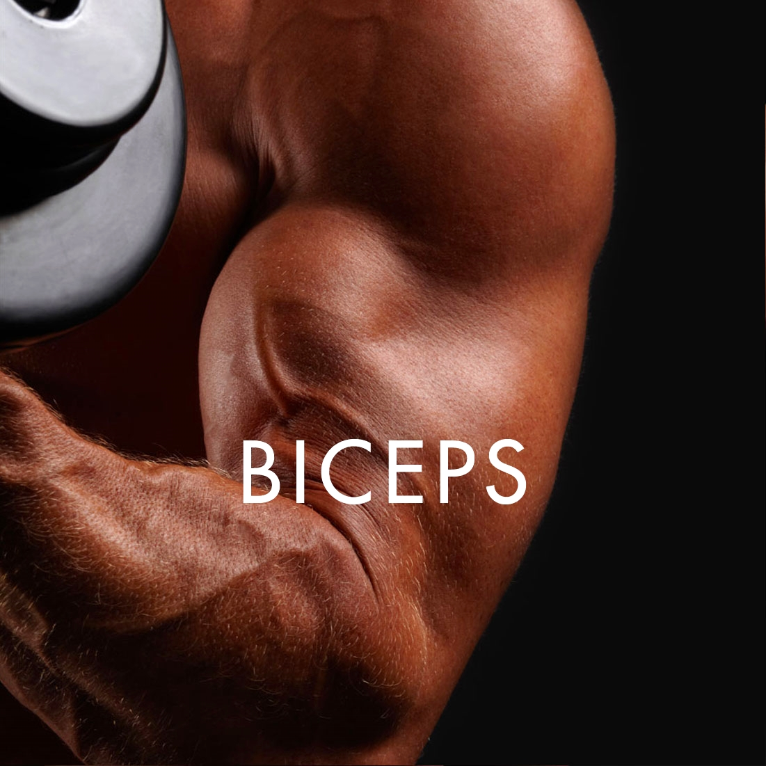 BICEPS_SQ