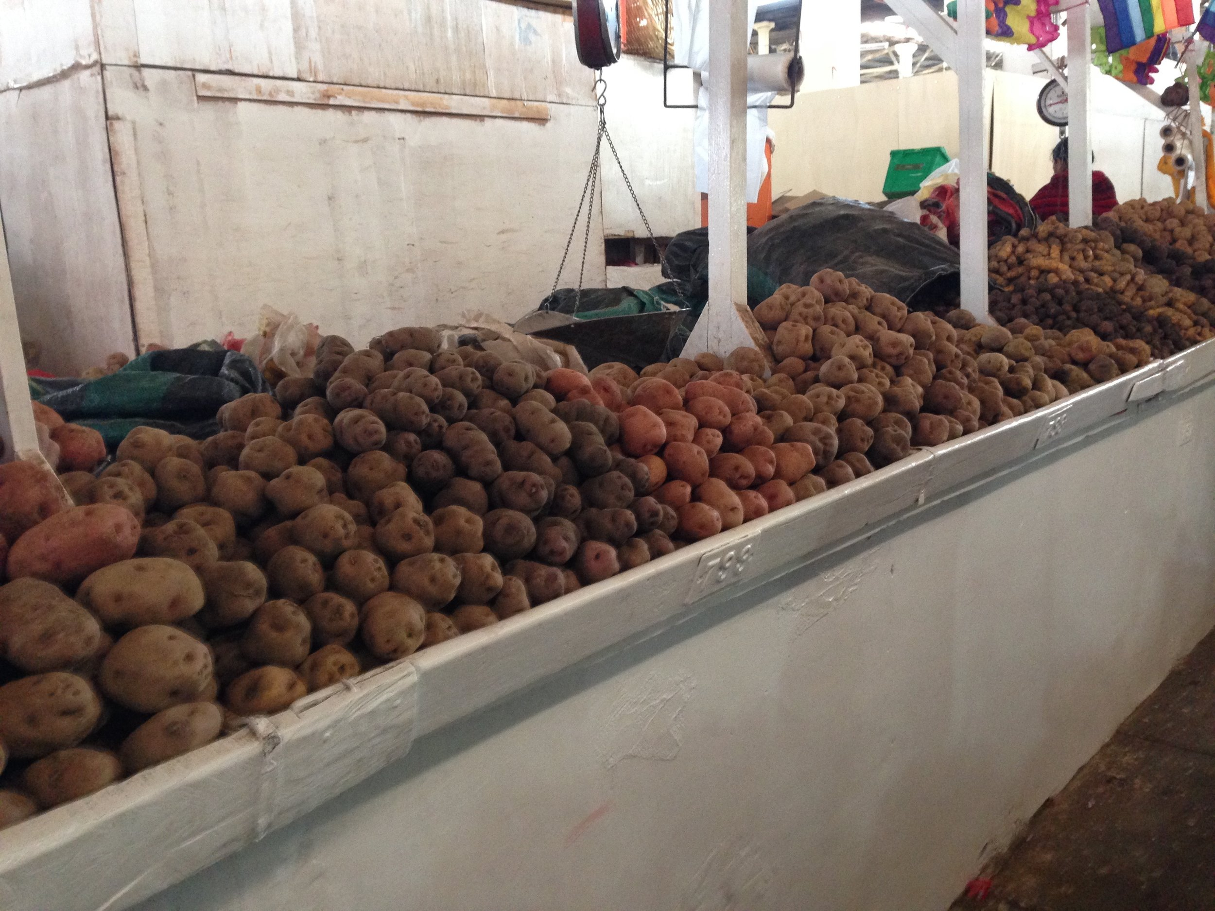 A few of the 3000 + varieties of potatoes - a staple of Peruvian cuisine