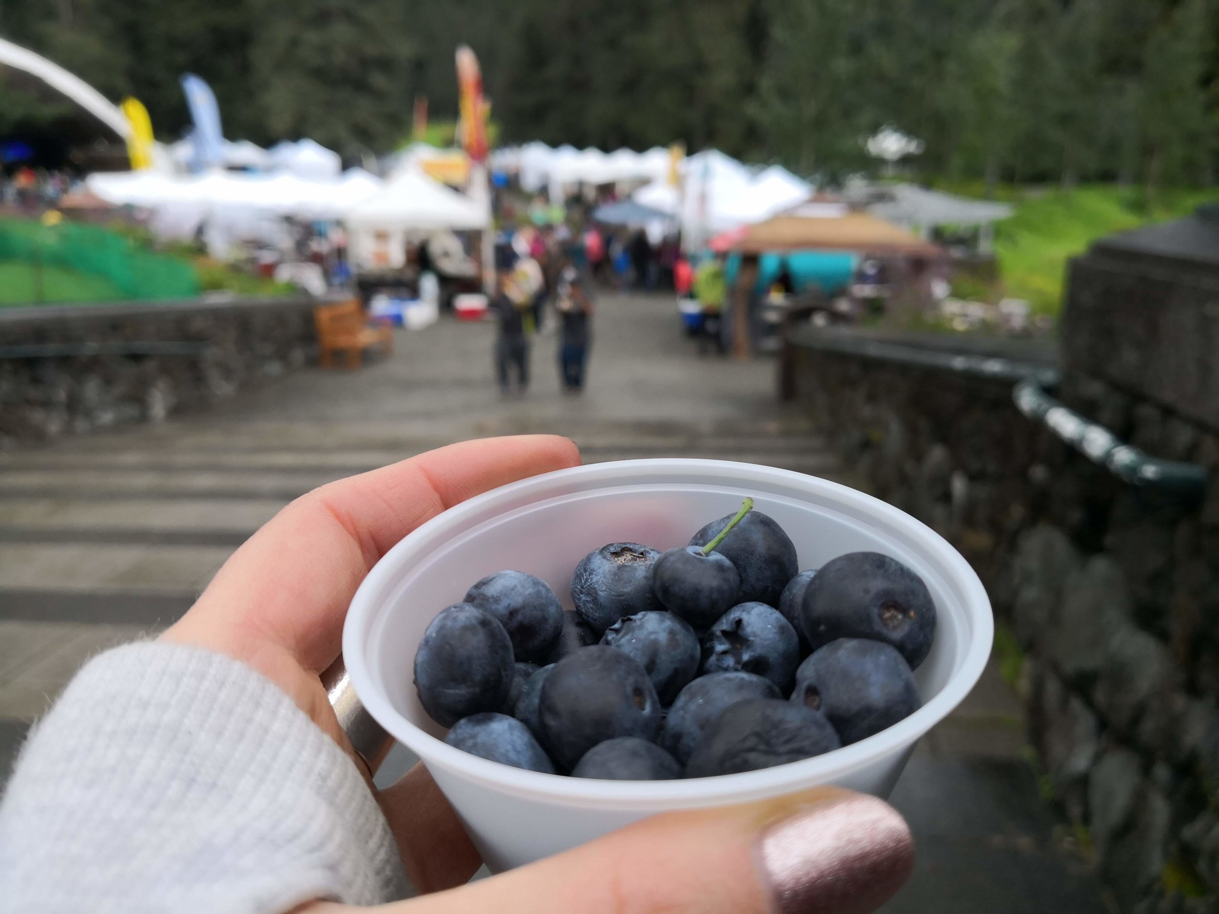 Wild Blueberries!