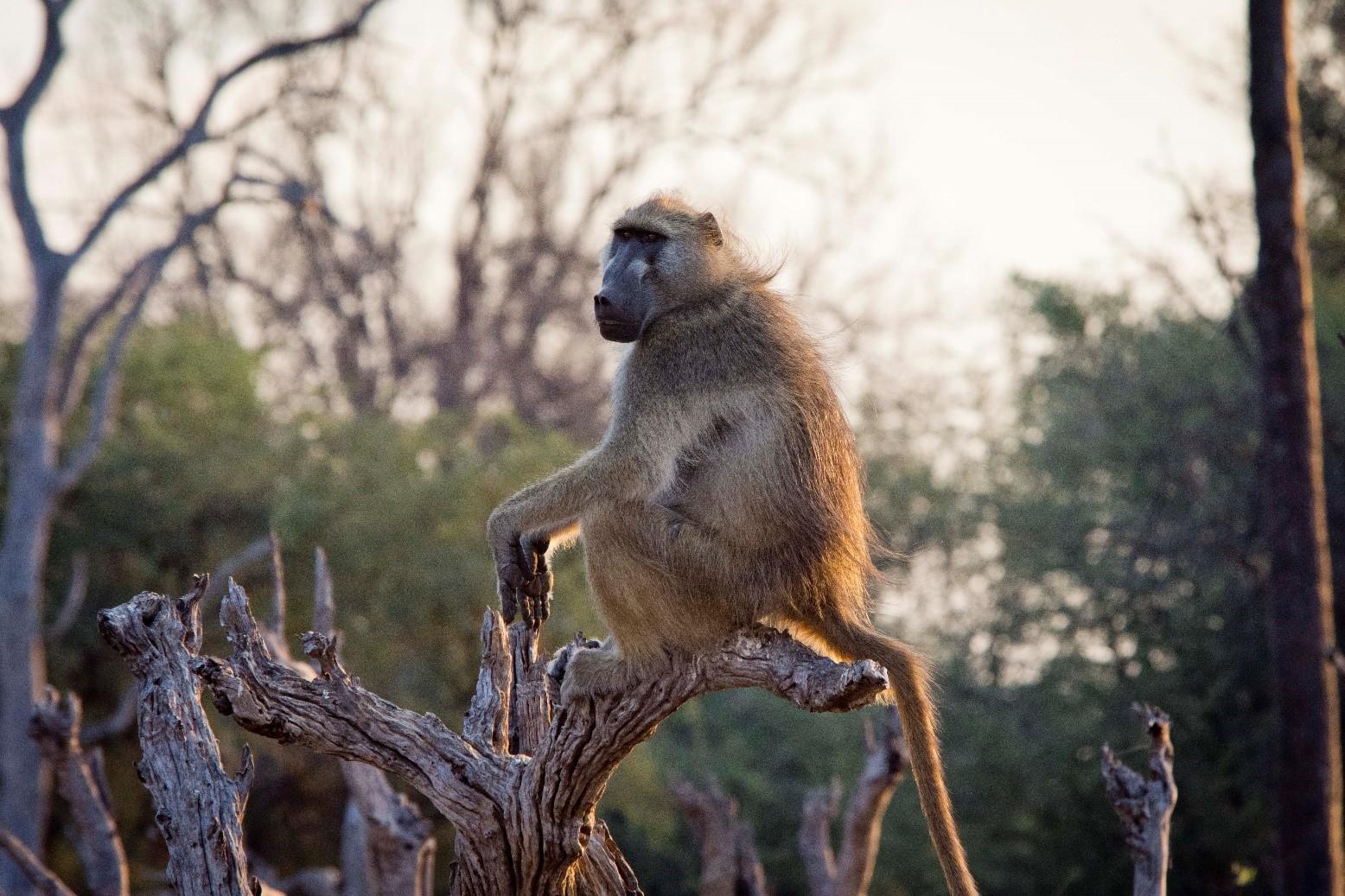 pic 2 monkey.jpg