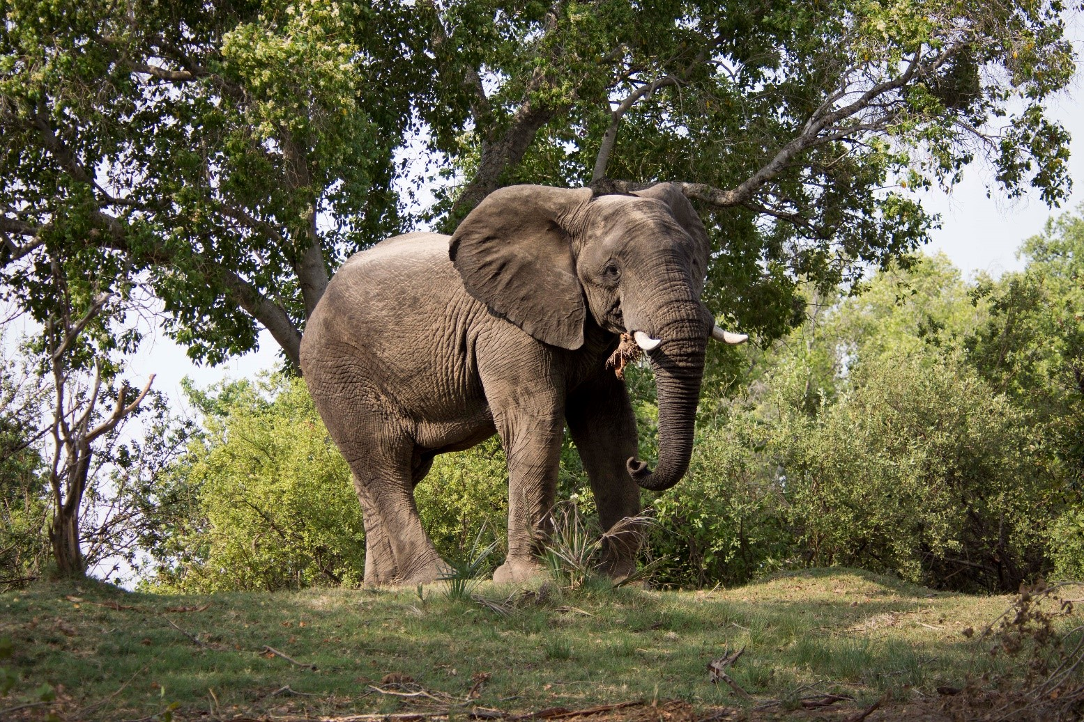 pic 10 elephant.jpg