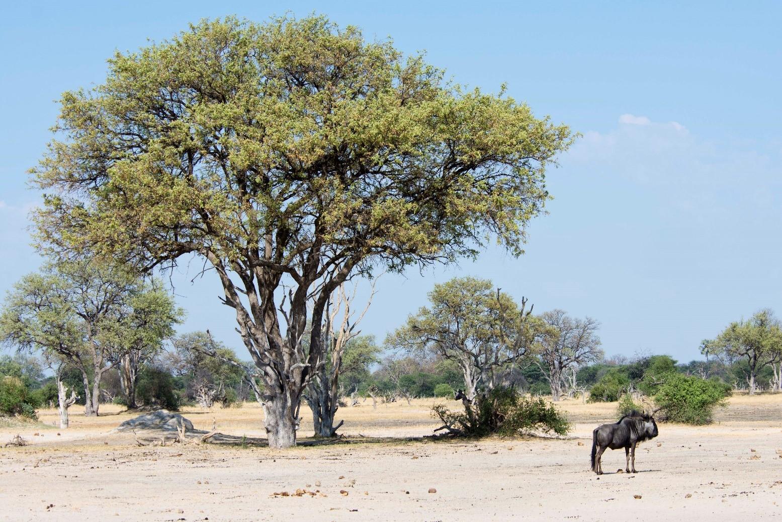 pic 15 tree.jpg
