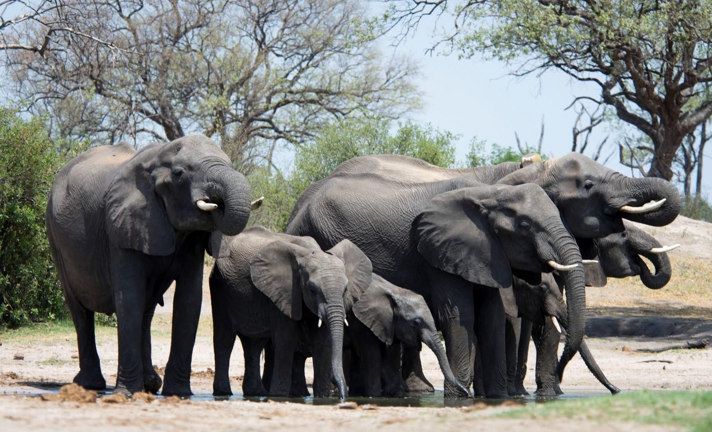 pic 28 elephant herd.jpg