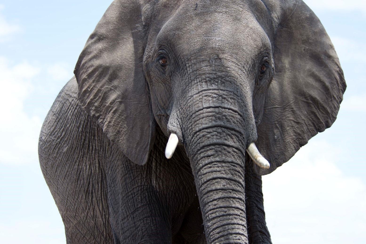 pic 30 elephant.jpg